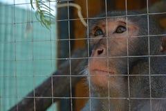 Una scimmia che vuole essere libera fotografia stock