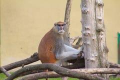 Una scimmia nello zoo Fotografia Stock Libera da Diritti