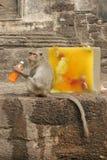 Una scimmia si siede vicino ad un blocco di ghiaccio riempito di alimento e di fiori Fotografie Stock