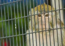 Una scimmia in una gabbia fotografia stock
