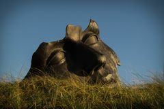 Una scultura di pietra capa in pascolo immagine stock