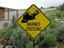 Una señal de peligro que las marmotas pueden cruzar imagen de archivo libre de regalías