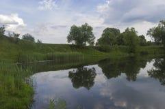 Una sección de una charca con la reflexión de la vegetación Fotografía de archivo libre de regalías