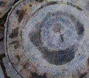 Una sección radial de un tronco de árbol imagen de archivo libre de regalías
