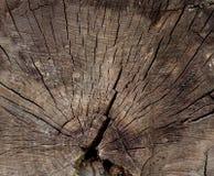 Una sección radial de un tronco de árbol fotografía de archivo libre de regalías