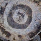 Una sección radial de un tronco de árbol imagen de archivo