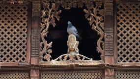 Una seduta del piccione immagine stock
