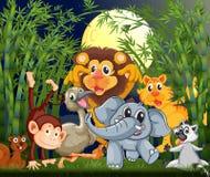 Una selva tropical con los animales que dan un paseo en medio de la noche Imagen de archivo libre de regalías
