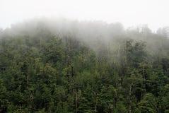 Una selva tropical templada Foto de archivo