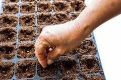 Una semilla de la sandía de la siembra de la mano Fotografía de archivo