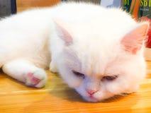 Una sensación del gato perezosa Foto de archivo libre de regalías