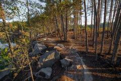 Una sera calda di estate sulla riva della cava Intorno coltivi gli alberi L'acqua riflette gli alberi Fotografia Stock Libera da Diritti