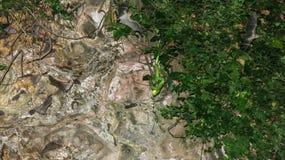 Una serpiente venenosa ocultada en una vegetación tropical en una cueva está al acecho para su presa Los palos vuelan en una cuev imagen de archivo