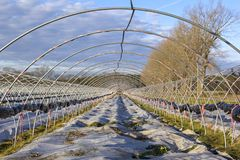 Una serra nell'inverno Niente si sviluppa nel tunnel fotografia stock