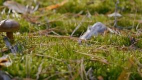 Una seta en la hierba de Forest Green Diapositiva de la cámara de la derecha hacia la izquierda Tiempo del otoño Primer almacen de video