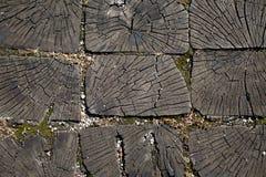 Una sezione trasversale del tronco di vecchio albero illustrazione vettoriale