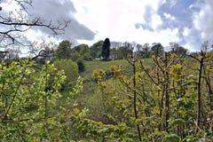 Una siepe di arbusti con le foglie verdi sta davanti ad un campo di erba verde fertile fotografie stock libere da diritti