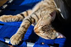 Una siesta debajo del sol imágenes de archivo libres de regalías
