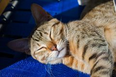 Una siesta debajo del sol foto de archivo libre de regalías