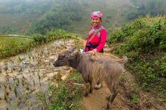 Una signora di Hmong con un bufalo del bambino, Sapa, Vietnam Immagini Stock