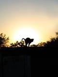 Una silueta de un gato en la puesta del sol foto de archivo