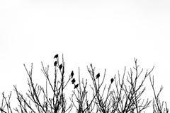 Una siluetta in bianco e nero di otto uccelli sopra l'albero Immagini Stock