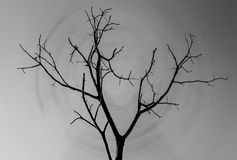 Una siluetta da solo di un albero isolato Fotografie Stock