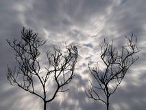 Una siluetta di due alberi morti con le nuvole di tempesta scure di moto sul cielo spaventoso Fotografia Stock