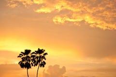 Una siluetta di due palme Fotografia Stock
