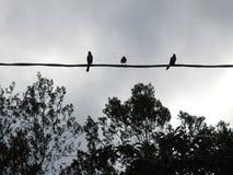 Una siluetta di tre piccoli uccelli su un cavo elettrico Siluetta degli alberi fotografia stock libera da diritti