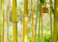 Una singola attaccatura arancio fra alcuni alberi in un giardino Fotografia Stock