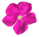 Disegno rosa di HDR del fiore isolato Fotografia Stock Libera da Diritti