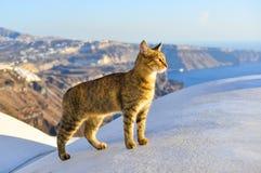 Una situación del gato en el top del tejado de la casa vieja fotos de archivo
