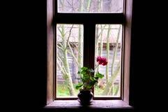 Una sola flor Fotos de archivo libres de regalías