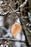 Una sola hoja cuelga de una rama durante invierno fotografía de archivo libre de regalías