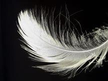 Una sola pluma detallada blanca imagen de archivo libre de regalías