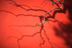 Una sombra del árbol en la pared roja de Pekín. Fotos de archivo libres de regalías