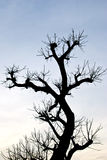Una sombra del árbol en puesta del sol. Imagen de archivo libre de regalías