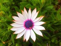 Una sorpresa del jardín Imagenes de archivo