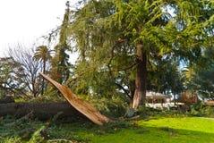 Una spaccatura dell'albero Immagine Stock