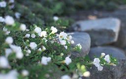 Una spazzola di bianco in un giardino Fotografia Stock