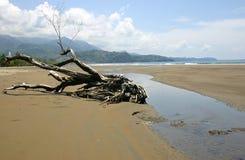 Una spiaggia in Costa Rica Fotografia Stock