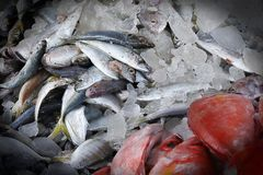 Una stalla a chalakudy, Kerala del pesce di bordo fotografia stock libera da diritti