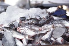 Una stalla di vendita del pesce di bordo nel Kerala, India, sud India uno spettacolo frequente dal lato della strada immagine stock libera da diritti