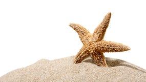 Una stella marina isolata su fondo Fotografia Stock