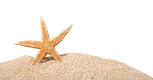 Una stella marina isolata su fondo Fotografie Stock Libere da Diritti