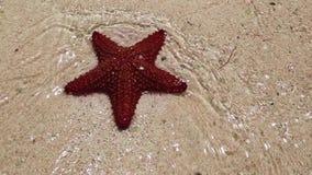 Una stella marina rossa stock footage