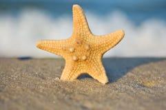 Una stella marina su una spiaggia sabbiosa contro cielo blu Fotografie Stock Libere da Diritti