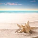 Una stella marina tropicale che risiede nella sabbia della spiaggia immagine stock libera da diritti