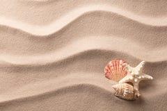 Una stella marina tropicale e conchiglie che risiedono nella sabbia della spiaggia fotografie stock libere da diritti
